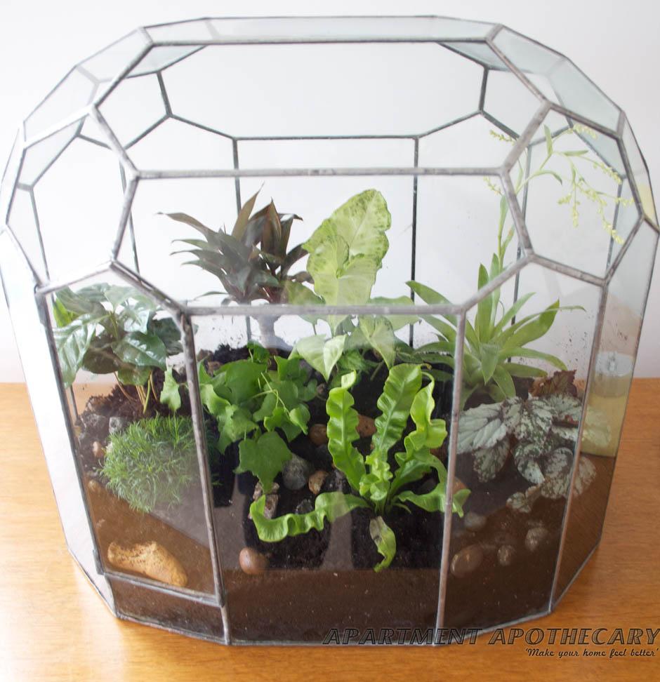 How to plant a Victorian terrarium