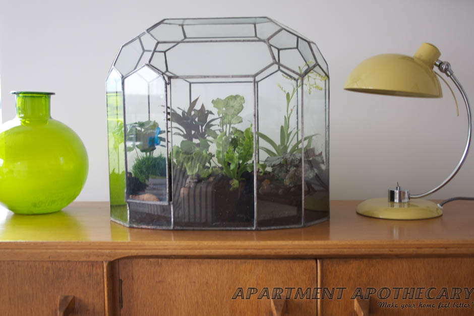 How to plant a Victorian terrarium