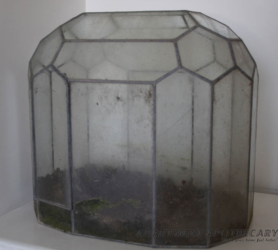 Antique Victorian terrarium