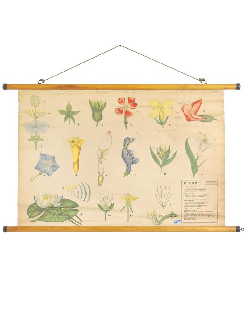 Vintage French educational wall chart from Wallography www.apartmentapothecary.com