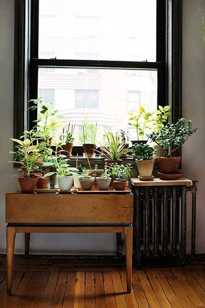 How to add plants to your home www.apartmentapothecary.com