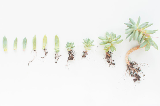 Propagating succulents advice from Joelix.com