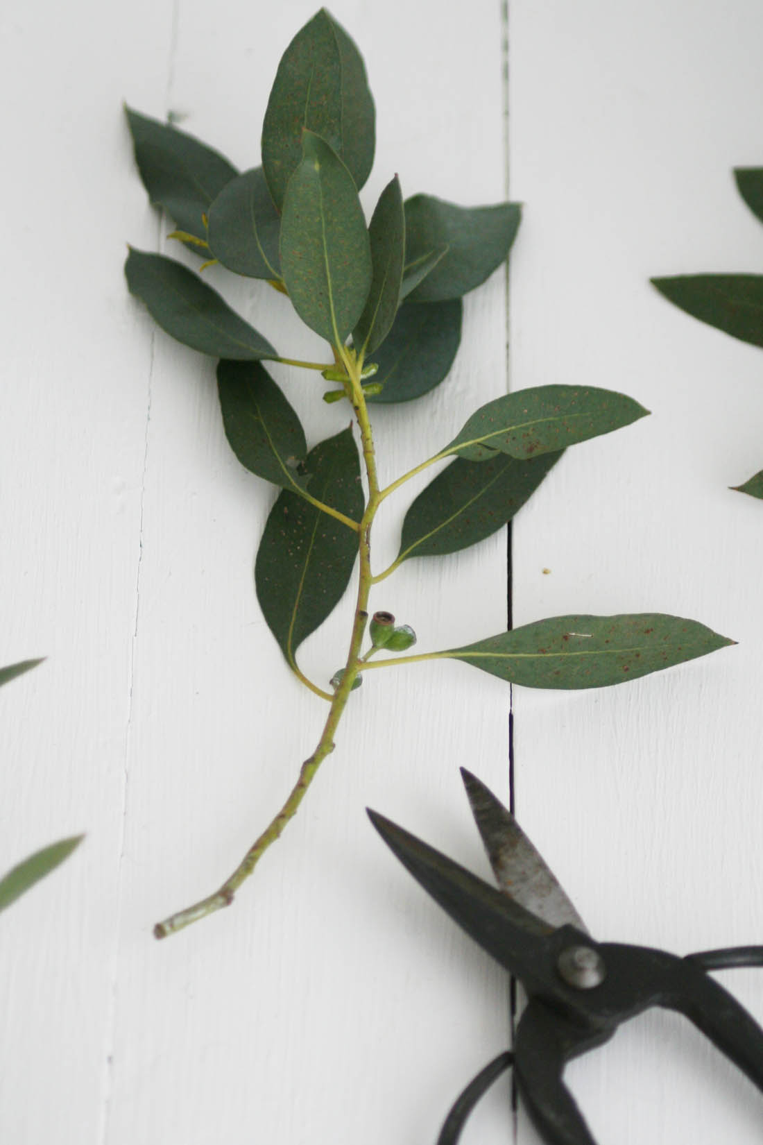 Natural Christmas garland | How to make a Eucalyptus garland | Apartment Apothecary