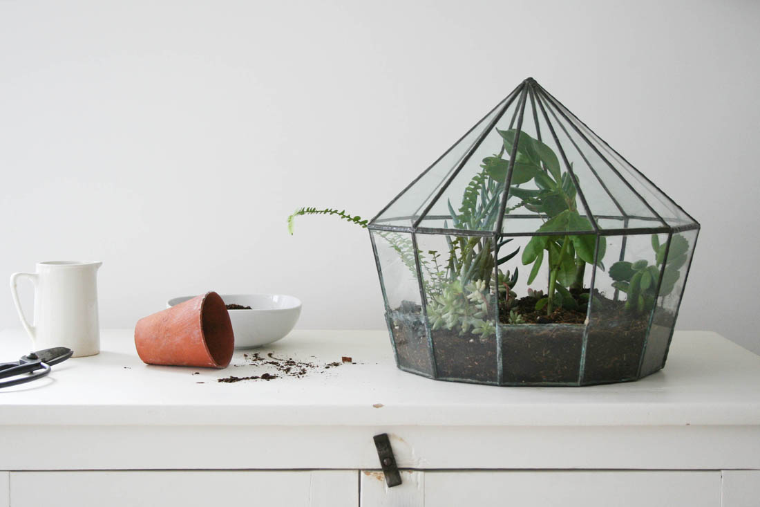 How to plant a terrarium   Apartment Apothecary