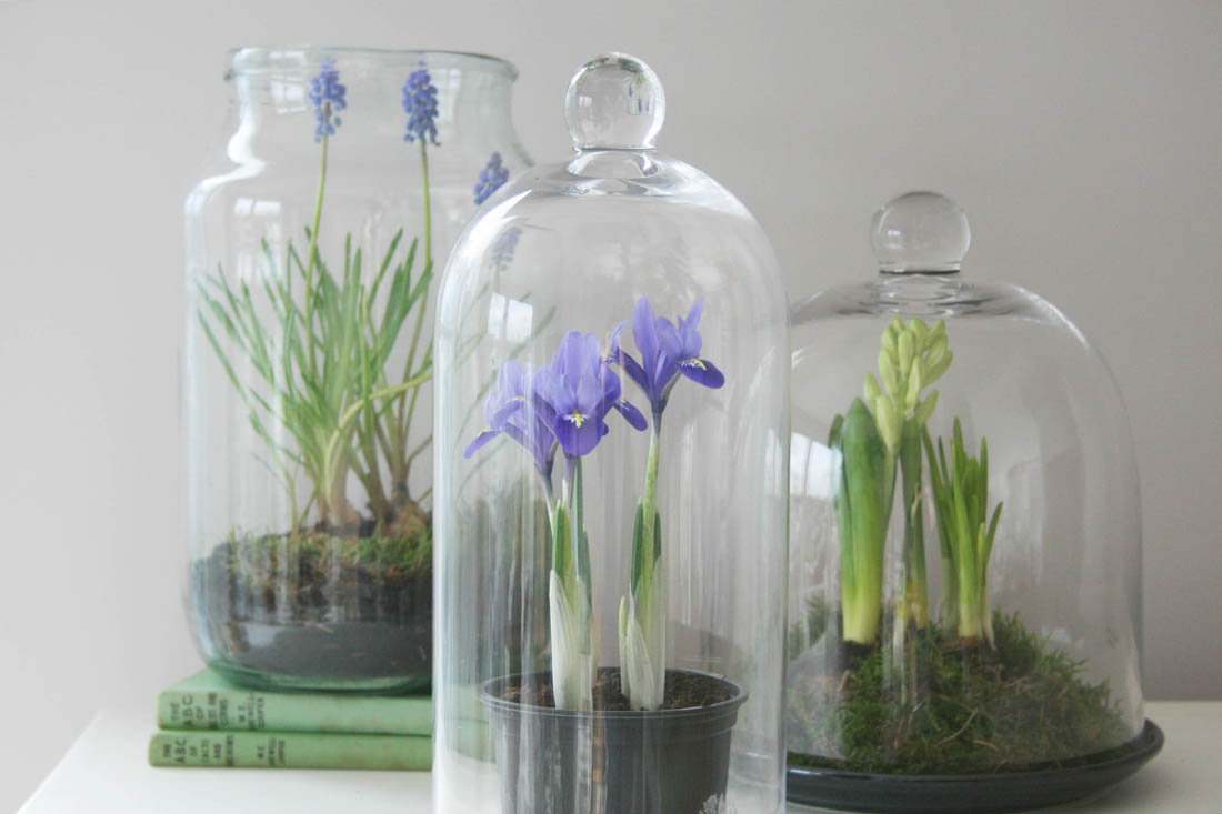 Styling the Seasons - March | Apartment Apothecary | Indoor bulbs | Plants under cloche