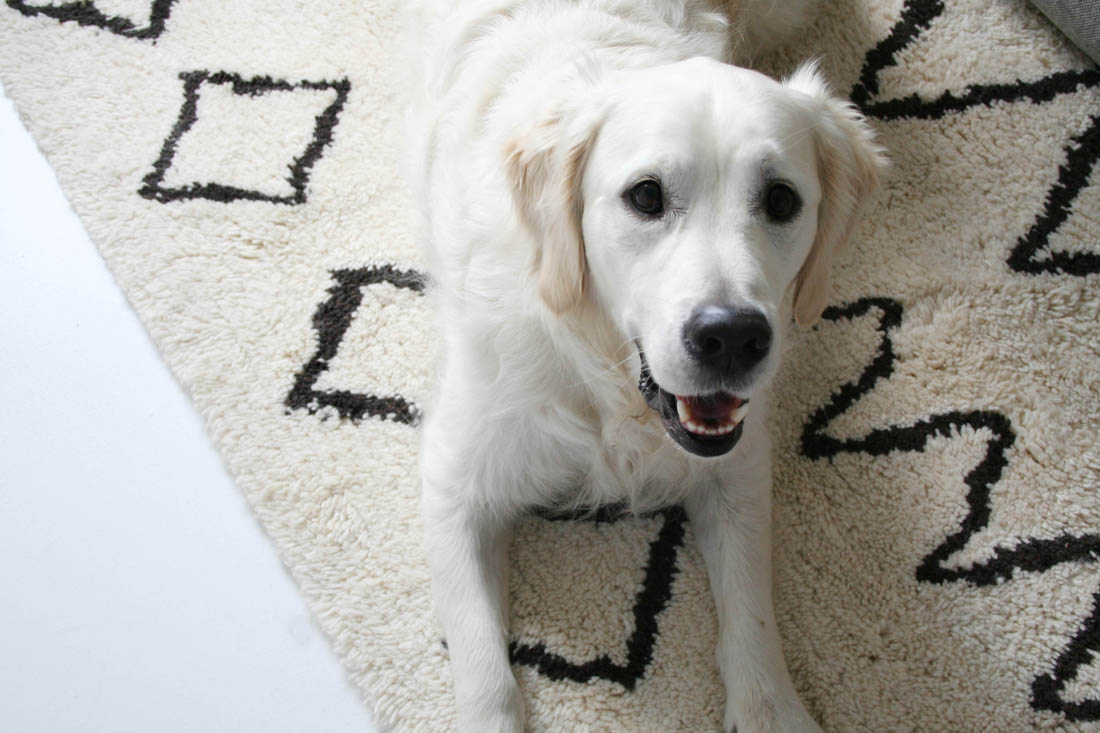 Dwell Berber rug | Golden Retriever | Apartment Apothecary
