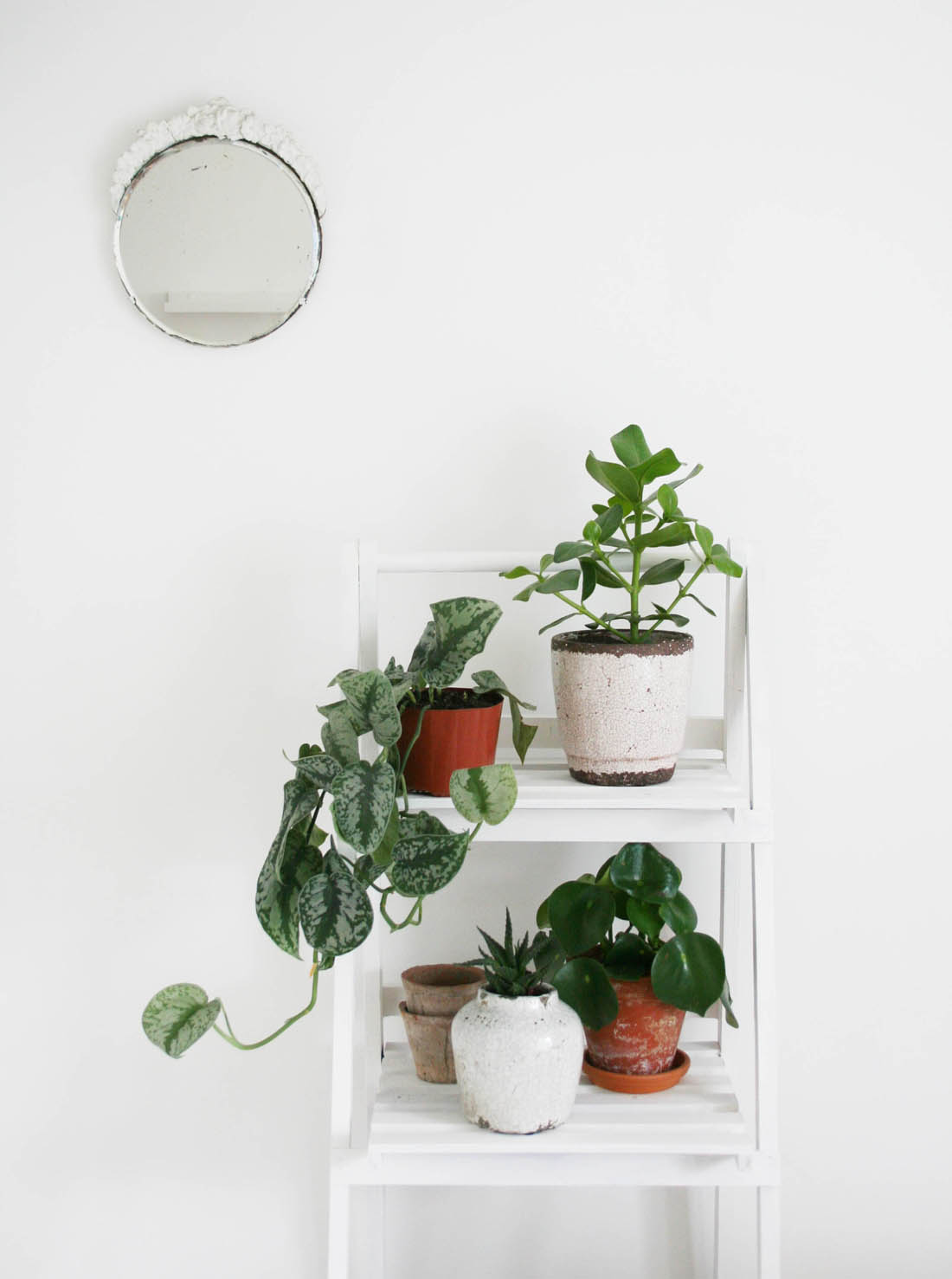 Different ways to use a plant ladder | Apartment Apartment