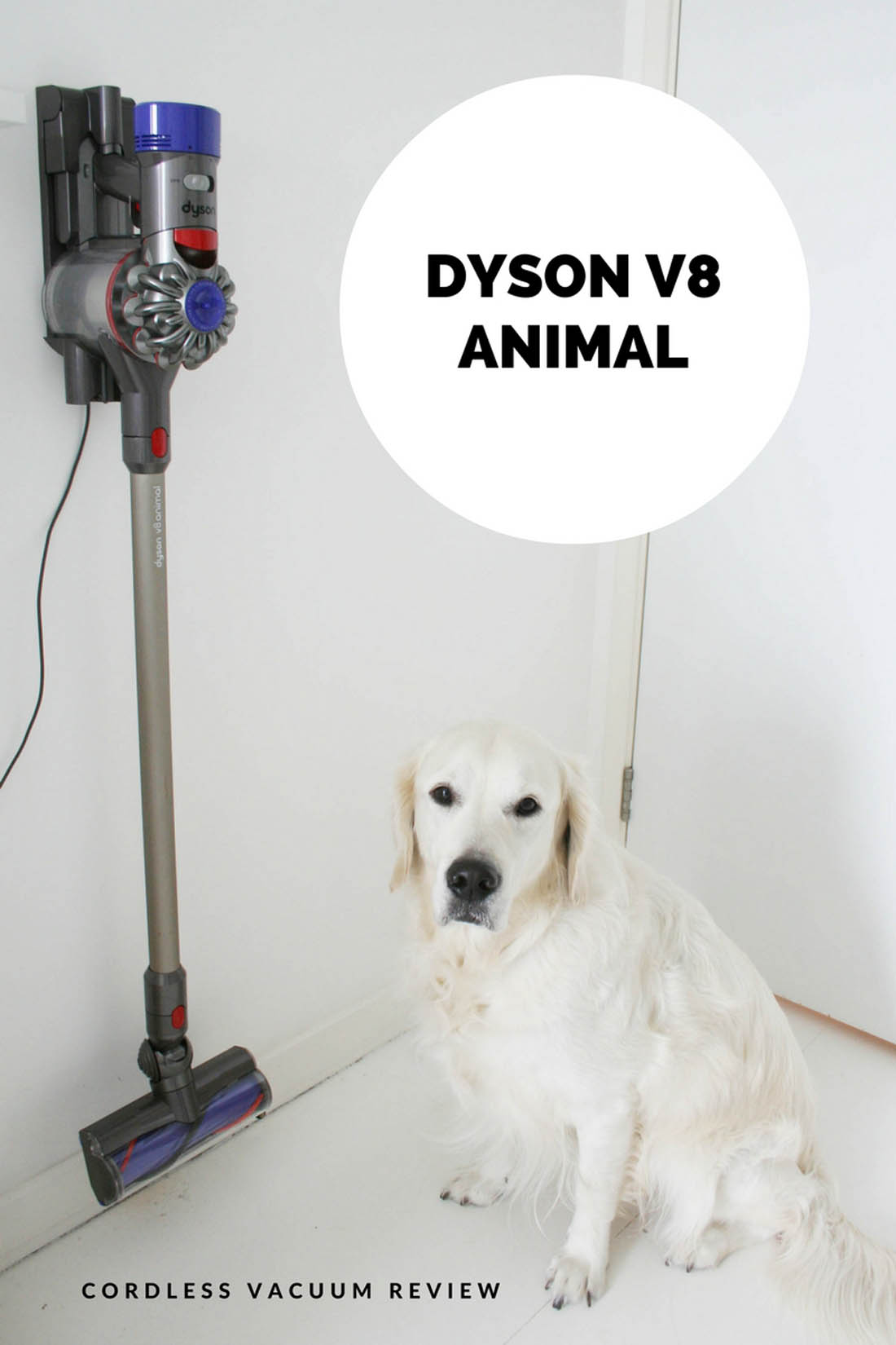 Dyson V8 Animal cordless vacuum review | How to keep your house clean with a dog | Apartment Apothecary
