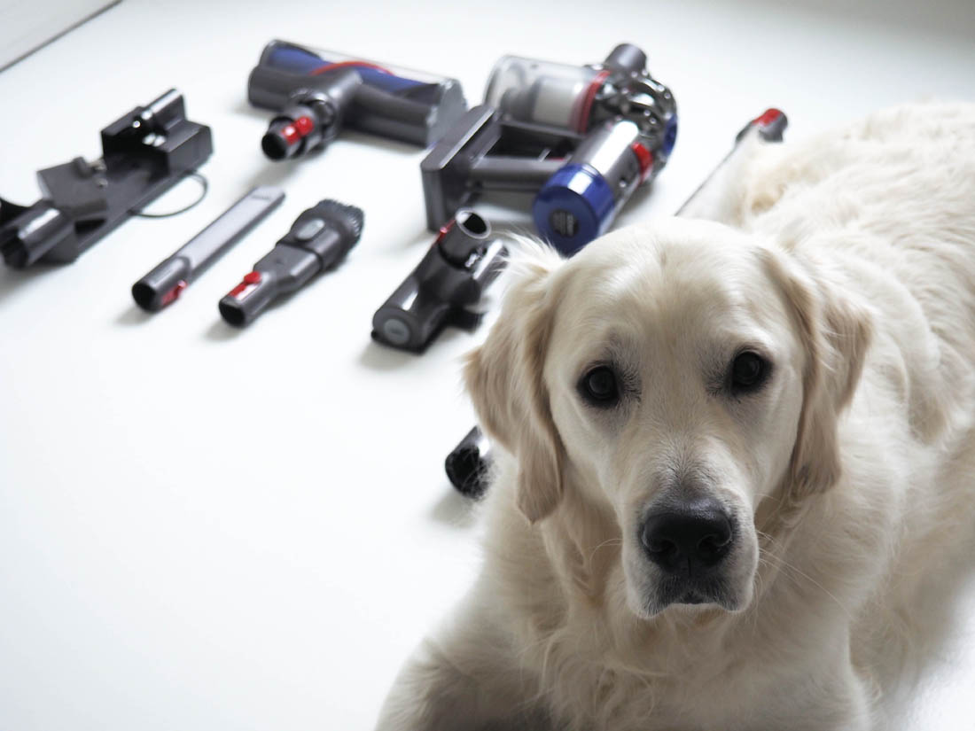 Dyson V8 Animal cordless vacuum review   How to keep your house clean with a dog   Apartment Apothecary